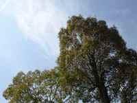 Pokapoka