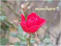 Minibara