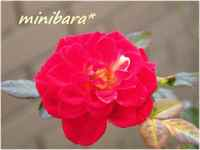 Minibara2