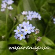Wasurenagusa