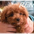 Ren_2