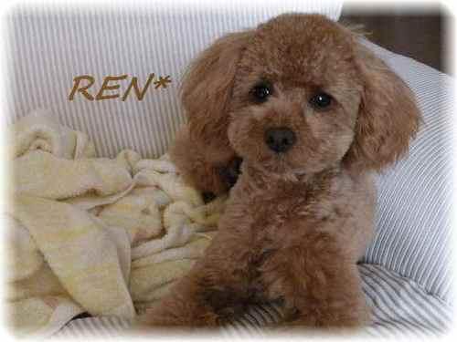Ren2_4