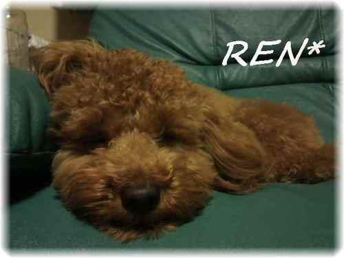 Ren_3